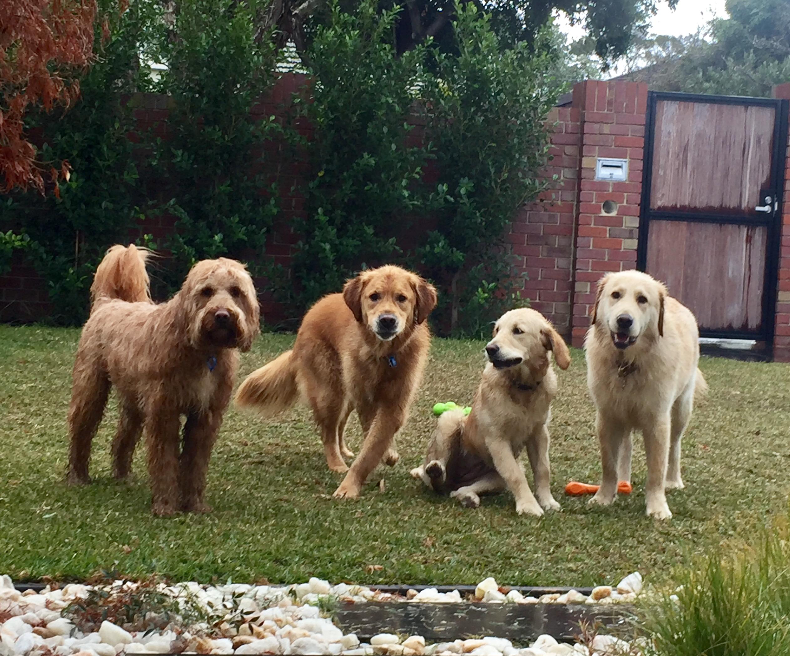dogs-recall-training