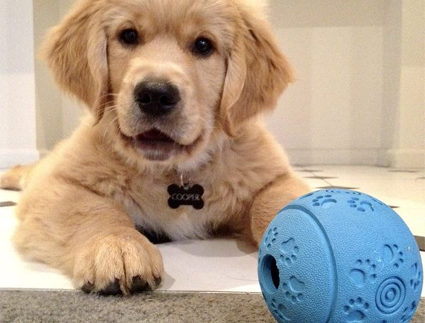 When is the right time to get your family dog?