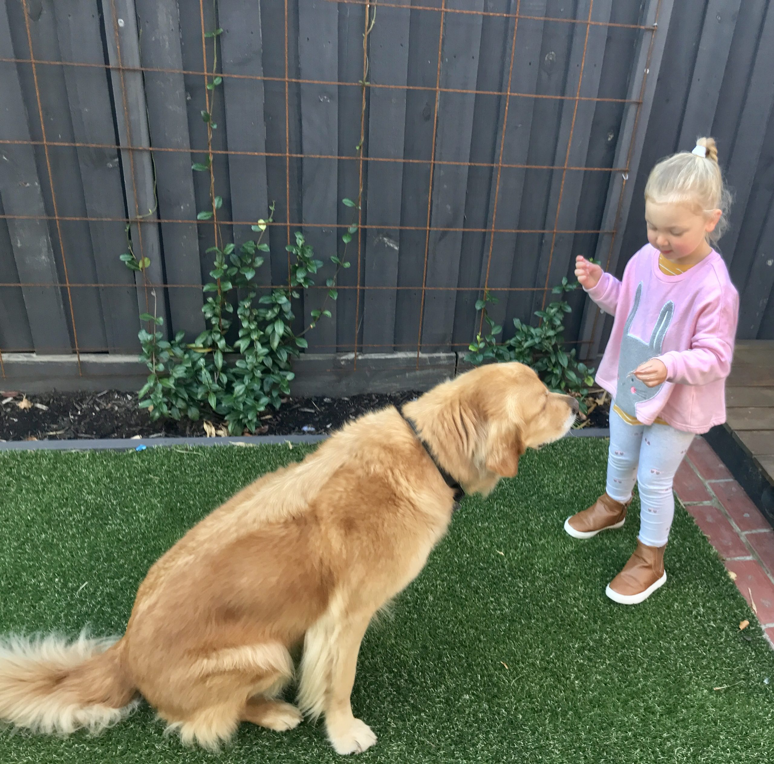Three steps to Teach your child how to safely say hello to dogs
