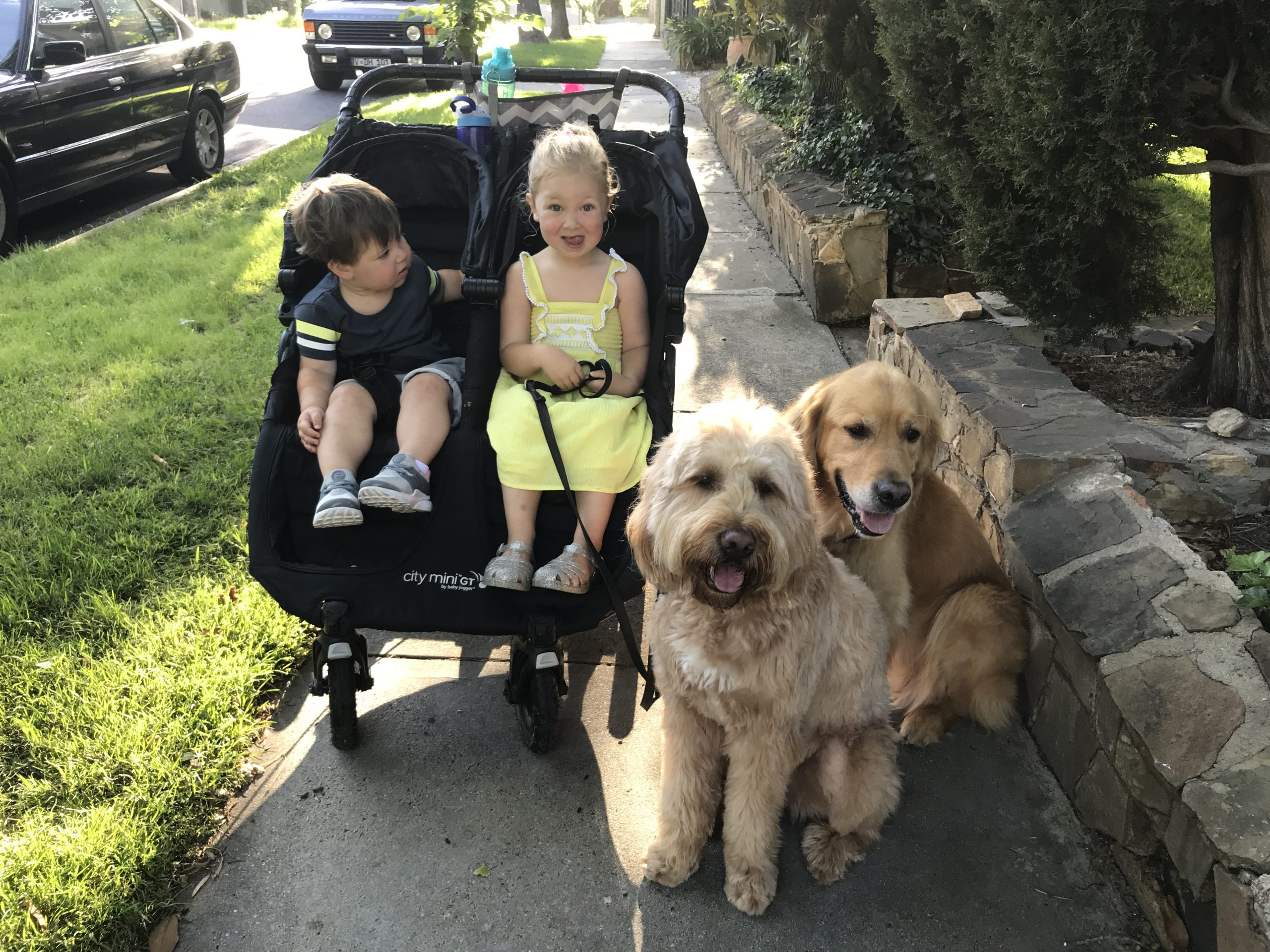 kids to the dog park