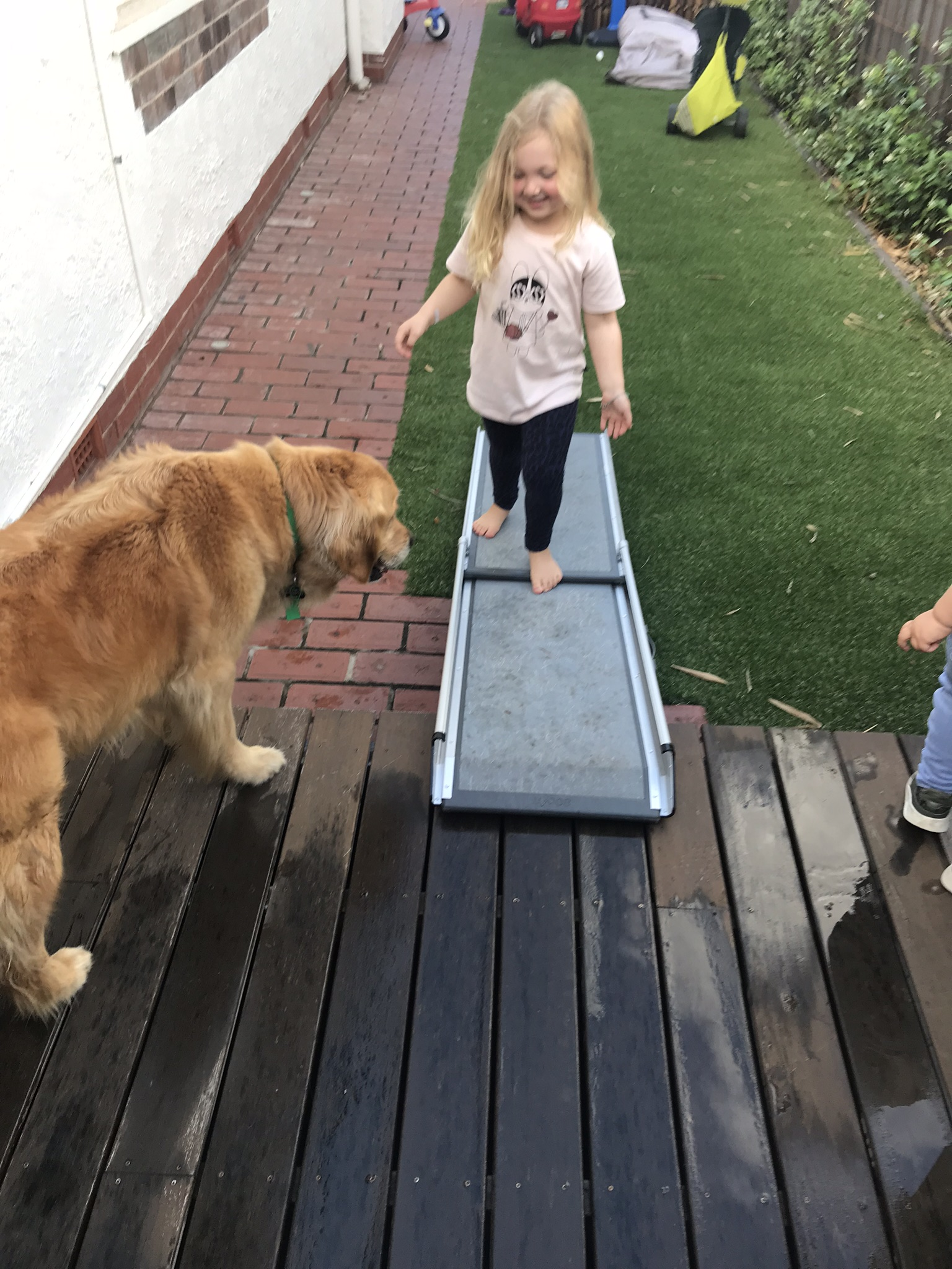 Teaching my Dog to use a Ramp
