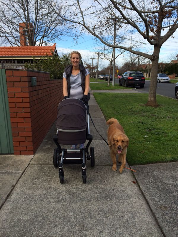 My tips to help prepare families with dogs for life with a new baby