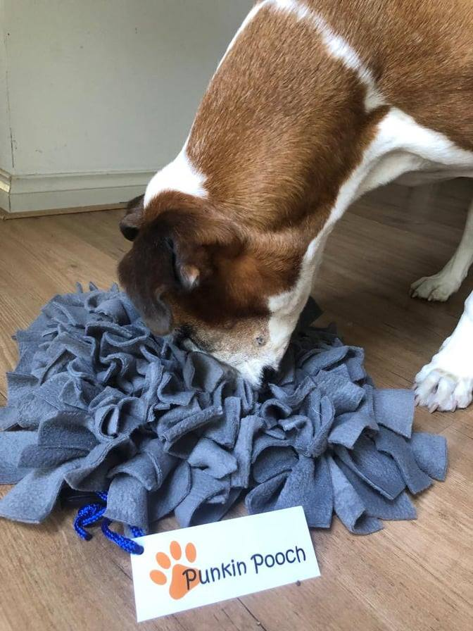 Making your dog's days more exciting through Enrichment. Here's how...