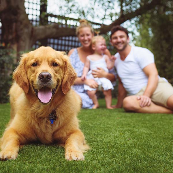 SERVICE - bringing a puppy home copy