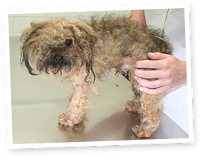 Don't support Puppy Mills - do your research before buying your dog!
