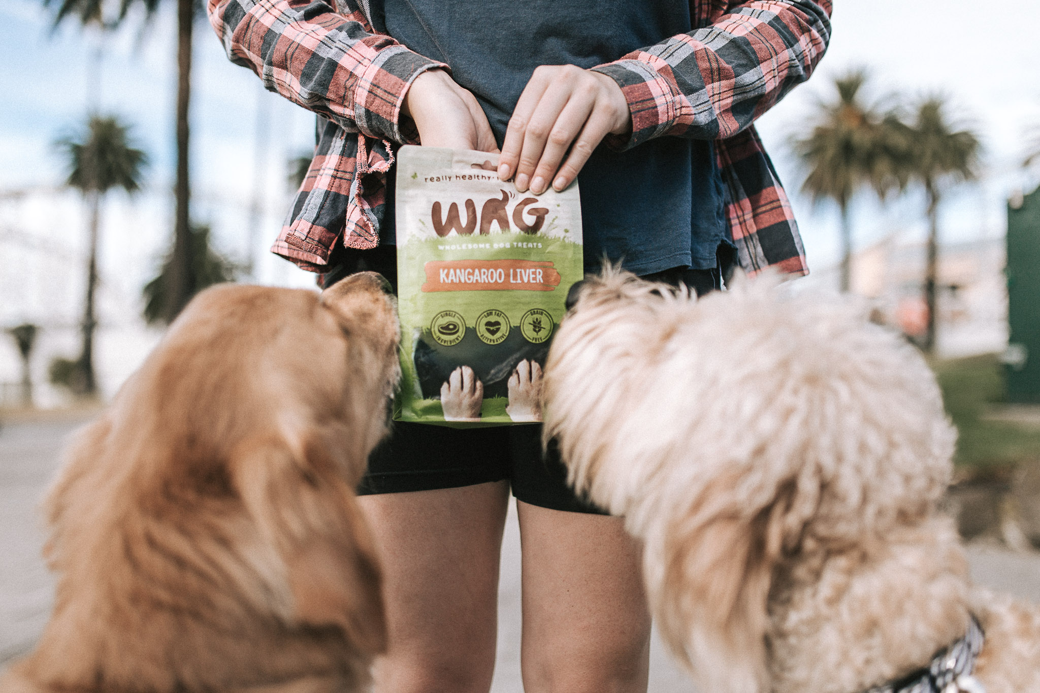 Healthy Snacks for Dogs