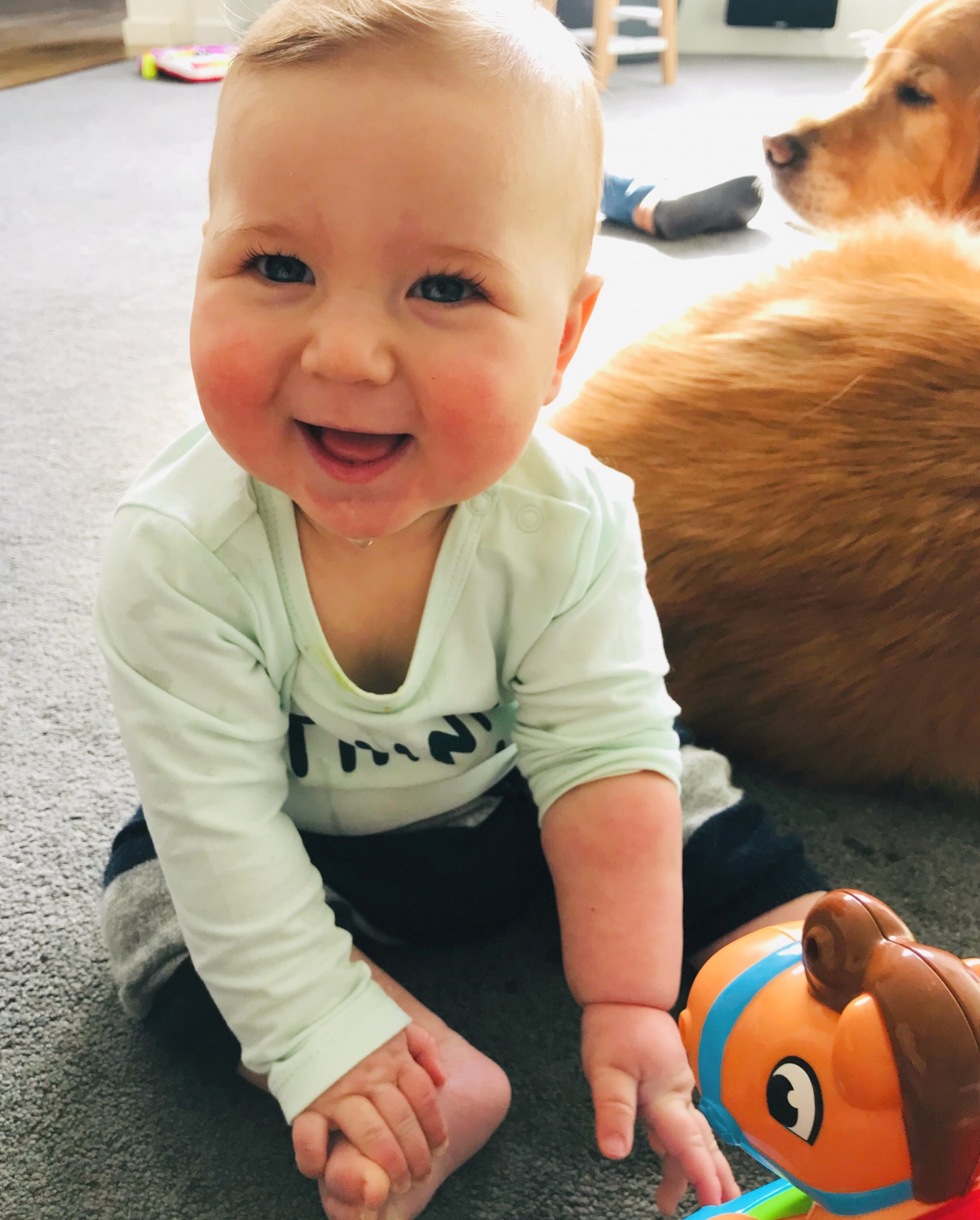 How do I prepare my dog for when my baby starts to move?