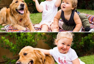 Good Intentions Aren't Enough. We want dogs to enjoy their encounters with children rather than just tolerating them.