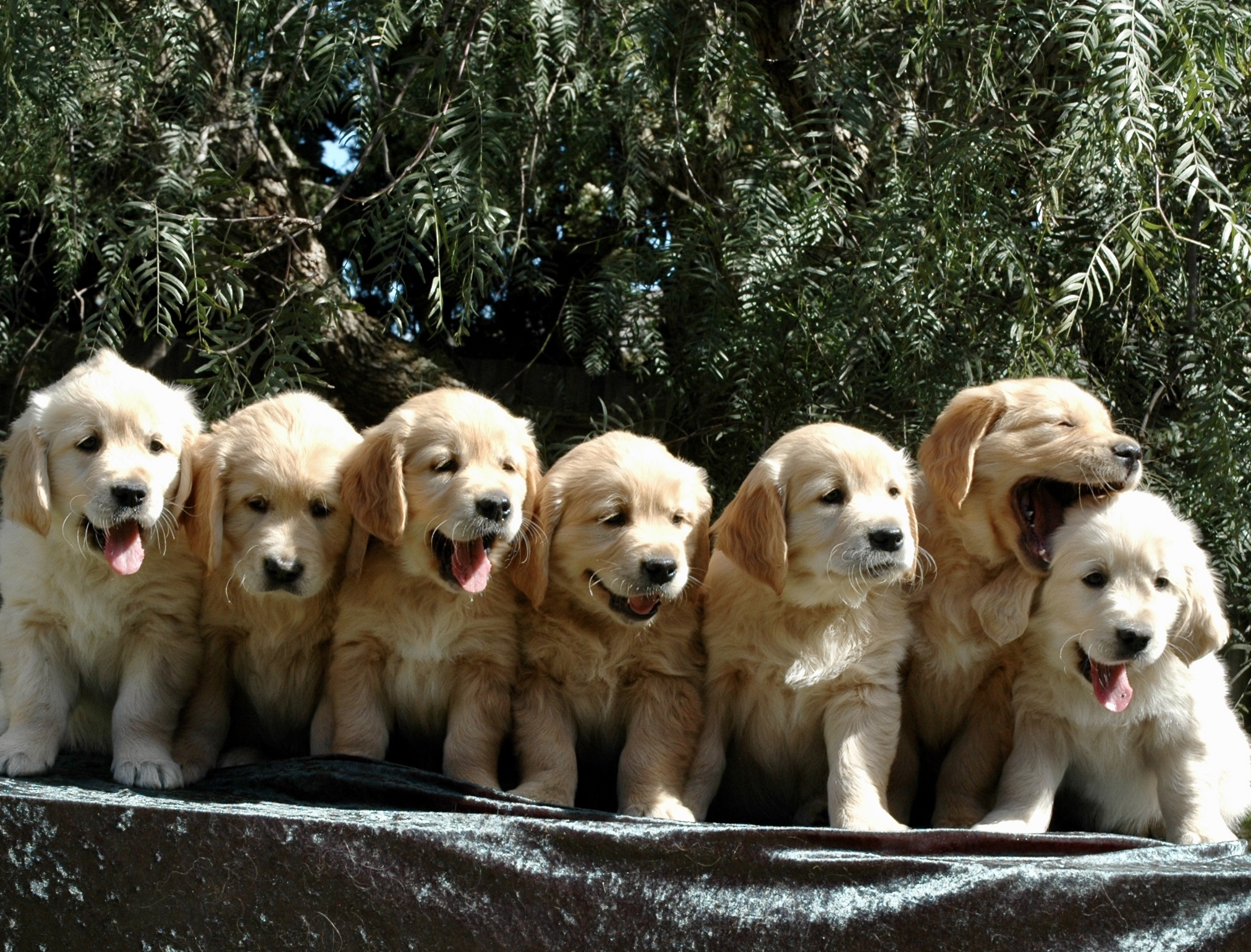 Choosing the Right Puppy from the Litter