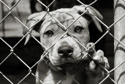 Thinking about adopting or rescuing a dog?