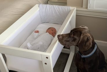 Is it Safe to Sleep with your Dog and Newborn Baby in the Same Room?